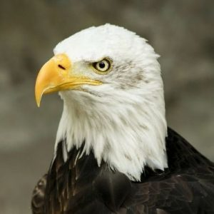 Au Clos de la Chaume campsite: Eagle