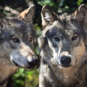 Au Clos de la Chaume campsite: Sainte-Croix Animal Park