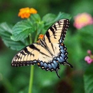 Au Clos de la Chaume campsite: Butterfly Gardens