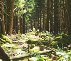 Au Clos de la Chaume campsite: Vosges by the Woods